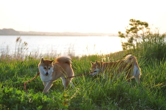 夕陽に向かって歩いていこう!_a0126590_1946635.jpg