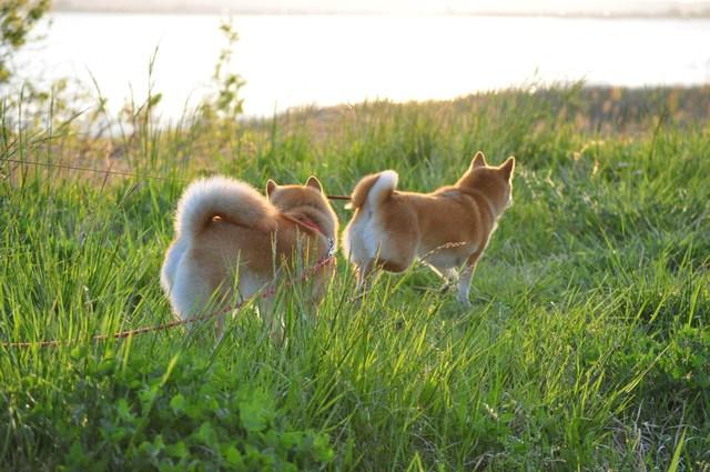 夕陽に向かって歩いていこう!_a0126590_19492795.jpg