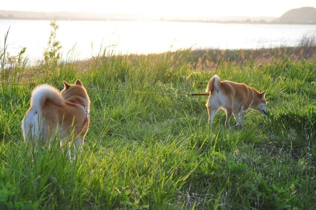 夕陽に向かって歩いていこう!_a0126590_1955460.jpg