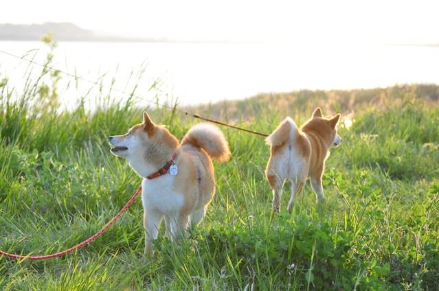 夕陽に向かって歩いていこう!_a0126590_19555449.jpg