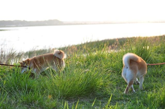 夕陽に向かって歩いていこう!_a0126590_19564749.jpg