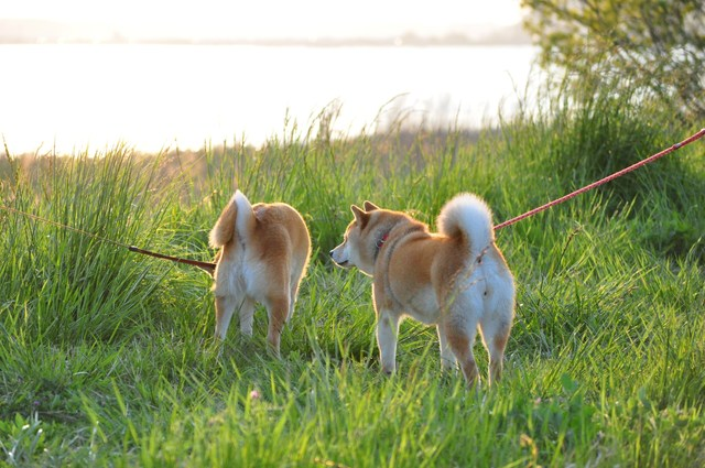 夕陽に向かって歩いていこう!_a0126590_19574378.jpg