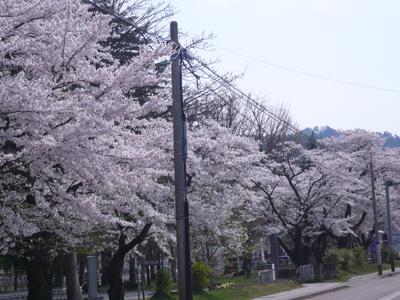 東日本大震災チャリティーモデル・MAGSTERレーシング入荷!_c0003493_947655.jpg
