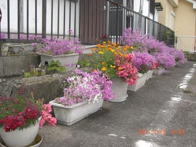 春の花_e0150006_15254574.jpg