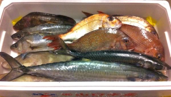 淡路島直送の魚 ⑧_e0210422_15105086.jpg