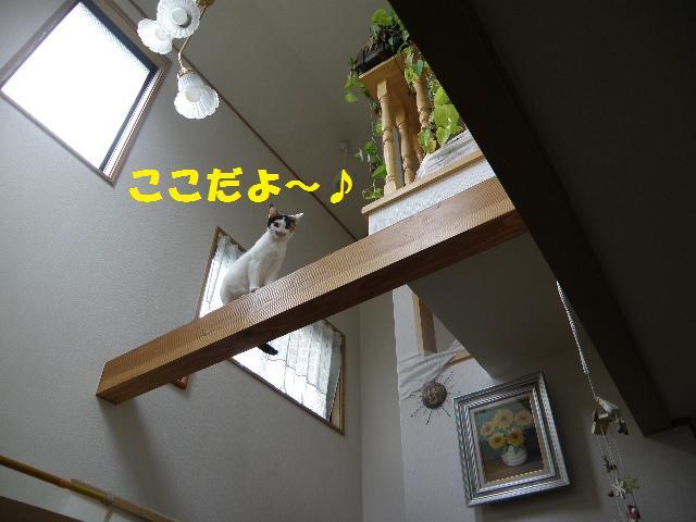 f0236744_0175065.jpg