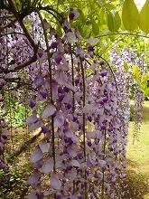 春爛漫_f0207652_1212556.jpg