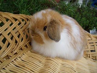 ホーランド23年3月29日誕生ブロークンオレンジ女の子_b0073753_22403093.jpg