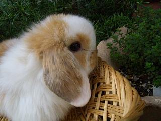 ホーランド23年3月29日誕生ブロークンオレンジ女の子_b0073753_2245092.jpg