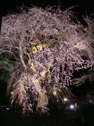 青森県 弘前城の桜_a0195373_0591916.jpg