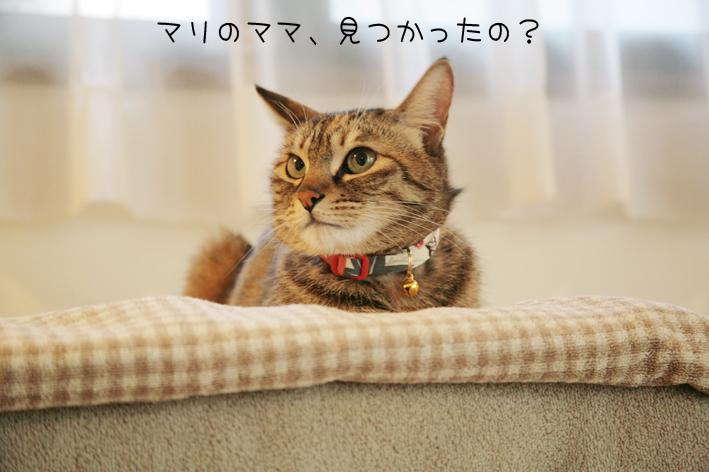 マリちゃん家族決定☆_c0223478_123737.jpg