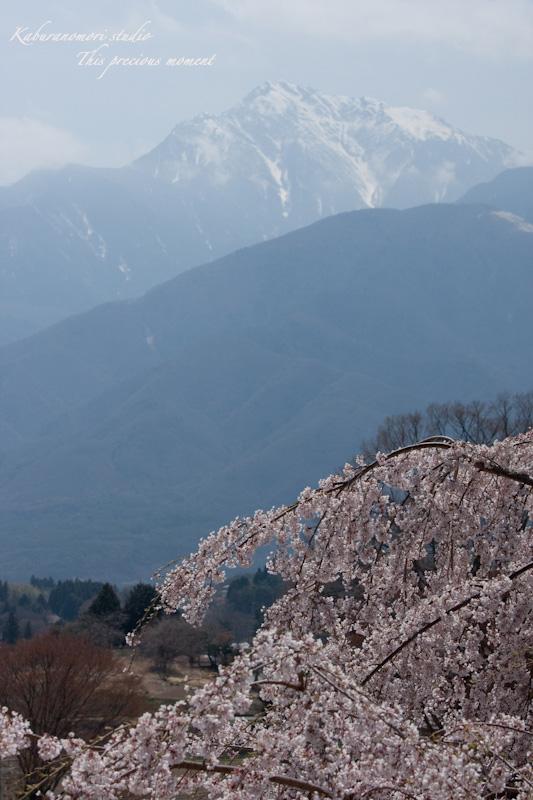 桜の季節南アルプスを望む_c0137403_19205632.jpg