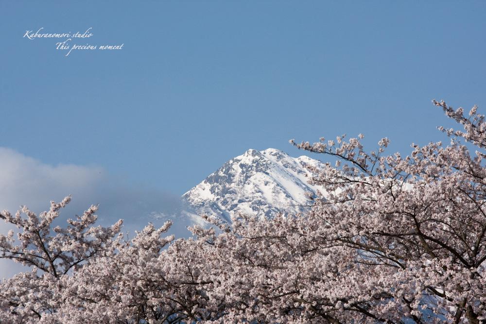 桜の季節南アルプスを望む_c0137403_1925593.jpg
