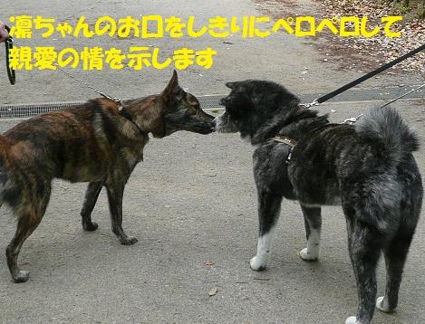 f0121712_23133037.jpg