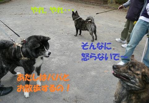 f0121712_2314499.jpg