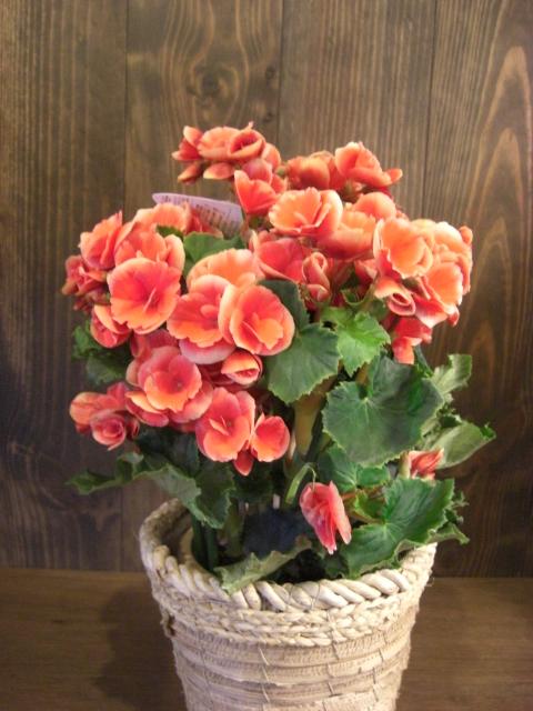 花鉢が入荷_f0226713_19383713.jpg