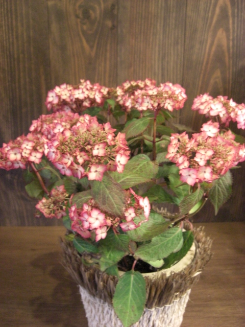 花鉢が入荷_f0226713_19384791.jpg