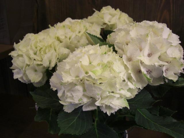 花鉢が入荷_f0226713_19385932.jpg