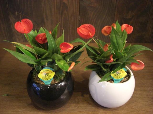 花鉢が入荷_f0226713_19391837.jpg