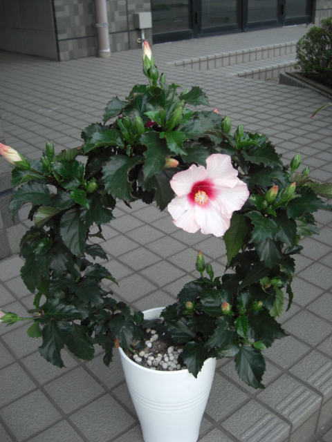 花鉢が入荷_f0226713_19392987.jpg