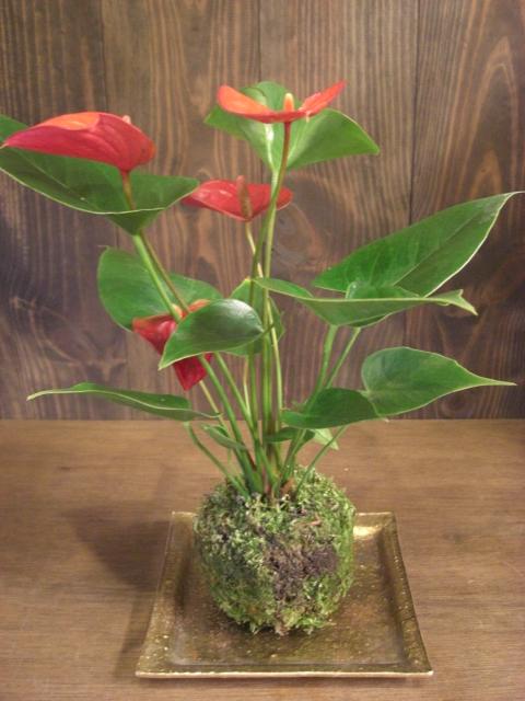 花鉢が入荷_f0226713_1939894.jpg
