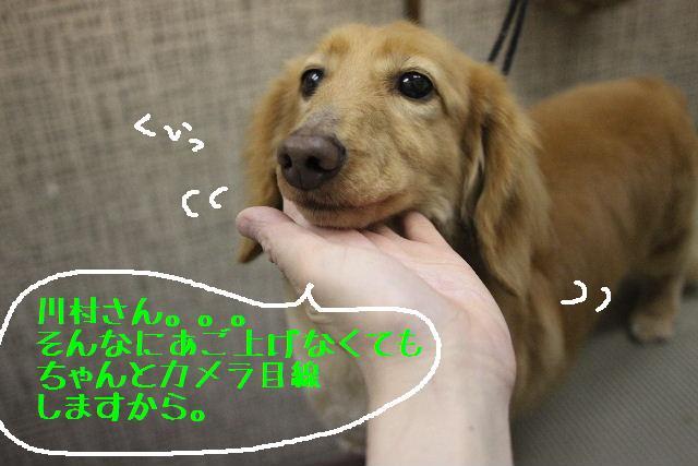 b0130018_1075637.jpg