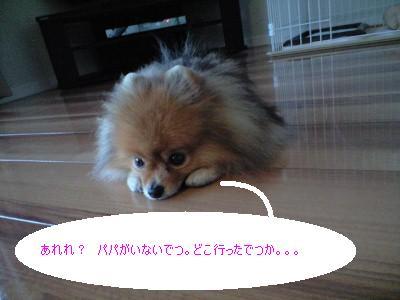 a0198521_001619.jpg