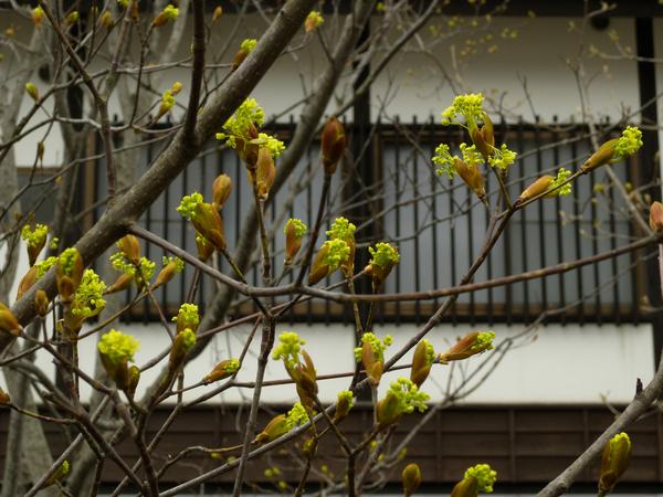 春が来た_c0176838_18583158.jpg