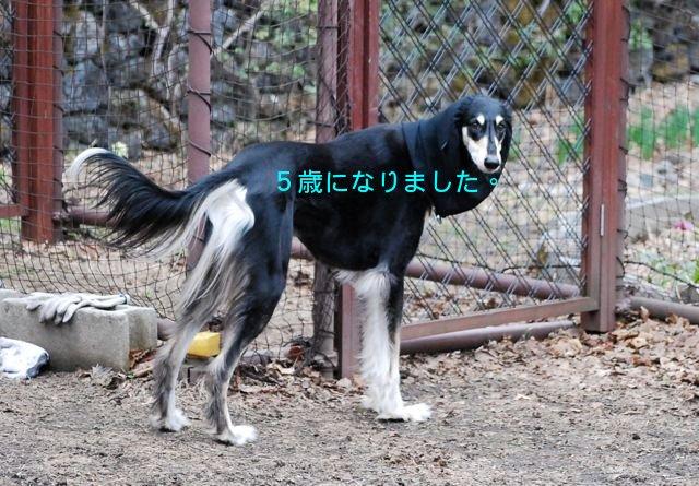 f0039538_2231083.jpg
