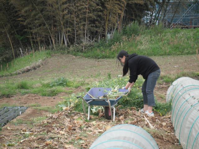おっ雉が・・・   初春の野菜を片付けます・・・_c0222448_11571824.jpg