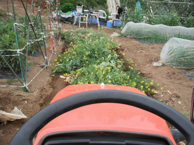 おっ雉が・・・   初春の野菜を片付けます・・・_c0222448_11573157.jpg