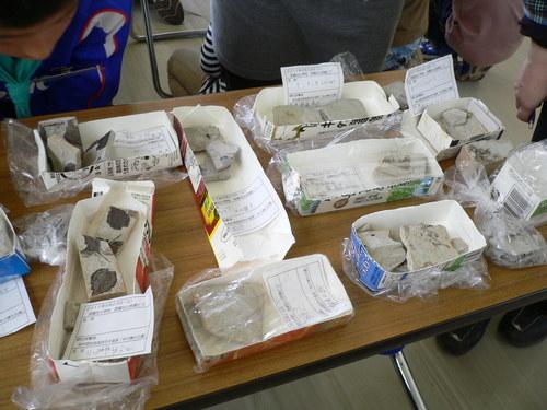 化石ほり_e0123469_1714462.jpg