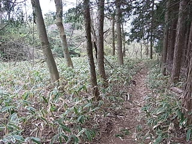 2011.5.3 三頭山から笹尾根を下る 日帰り_b0219778_1957220.jpg
