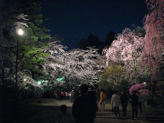 ◆夜桜◆_c0078202_1113219.jpg