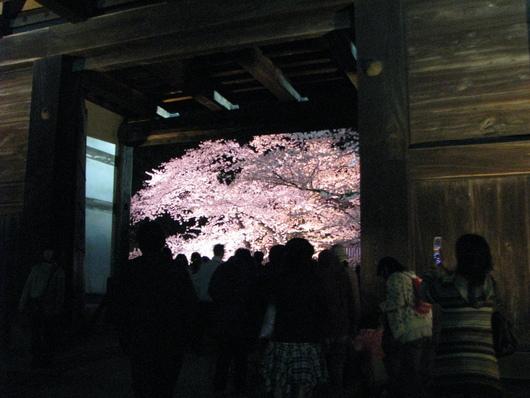 ◆夜桜◆_c0078202_11264594.jpg
