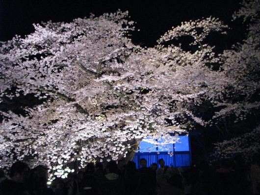 ◆夜桜◆_c0078202_11285735.jpg