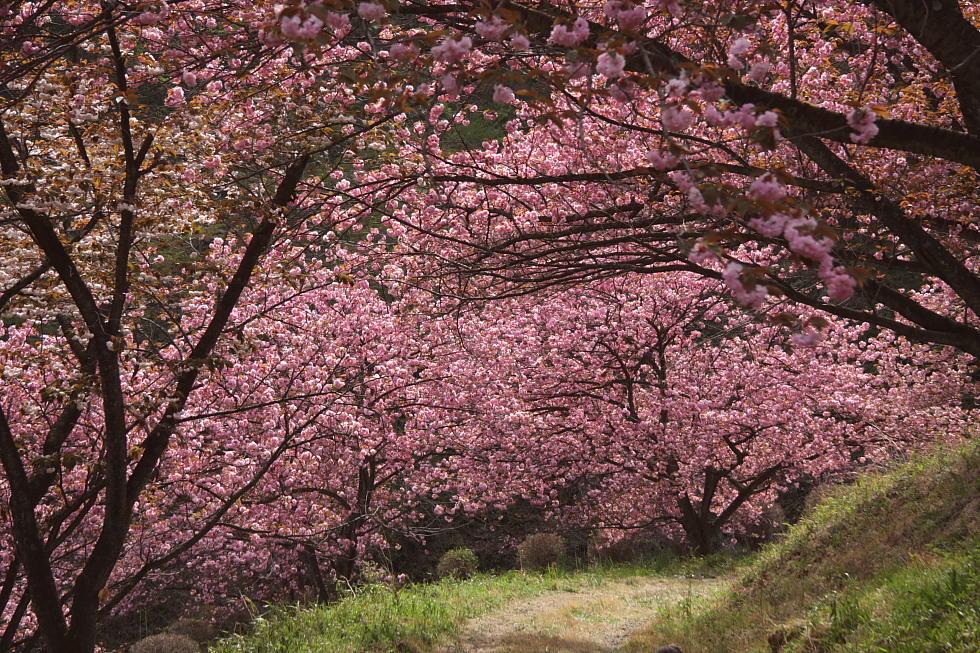 岩山二つ - 武甲山と妙義山 -_b0190710_23405710.jpg