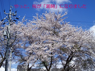 b0200310_221813.jpg