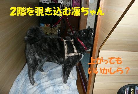 f0121712_0533668.jpg
