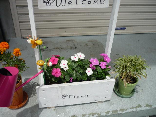 GW真っ只中★良い天気でお花も元気(^O^)_c0213517_1219914.jpg
