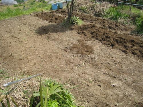 新しい畑が決まったよ~(嬉)_e0121558_21375794.jpg