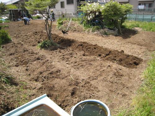 新しい畑が決まったよ~(嬉)_e0121558_21382517.jpg