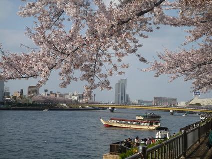 隅田川 お花見散歩_d0029066_23313990.jpg