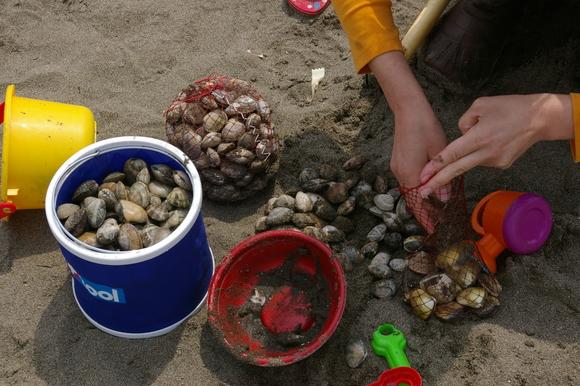 潮干狩りPart 1/shellfish gathering on a beach, part1_a0186568_012276.jpg