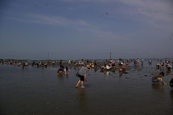 潮干狩りPart 1/shellfish gathering on a beach, part1_a0186568_2359511.jpg
