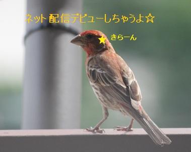 f0232083_9503574.jpg