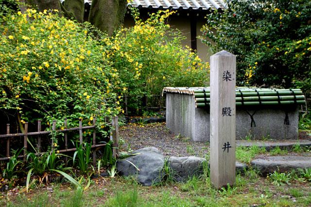 京都御苑のヤマブキ満開_e0048413_9303940.jpg