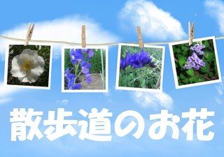 f0031546_1535758.jpg