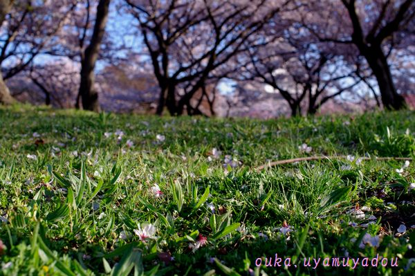 うれしくなる朝_a0157263_0193799.jpg