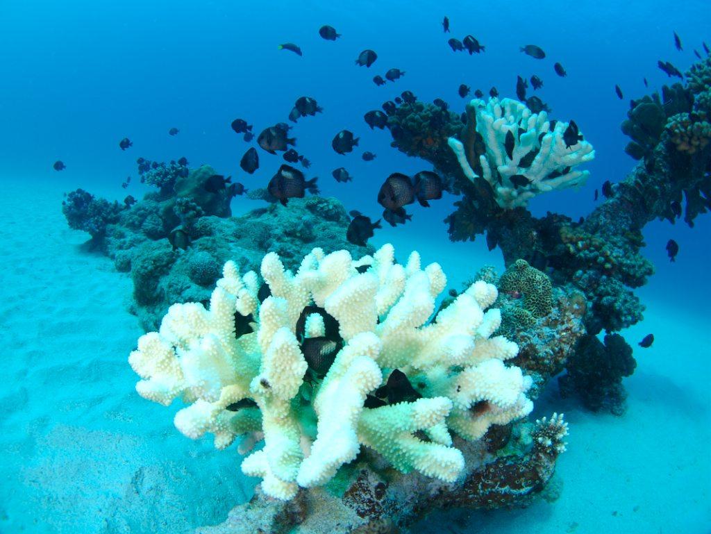4/28 褐藻類_a0010095_1105160.jpg